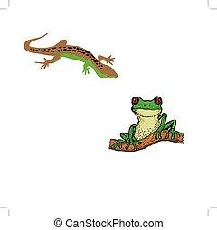 Lizard,tree frog