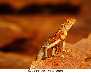 Lizzard in the Outback II - Lizzard resting on Rock in the ...
