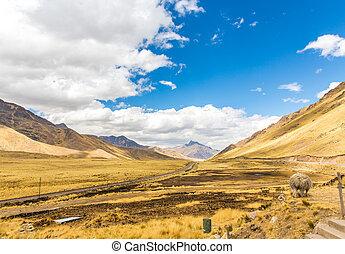 Llama, alpaca herding Road Cusco- Puno,Peru,South America....
