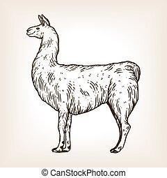 Llama animal engraving vector illustration. Brown aged...
