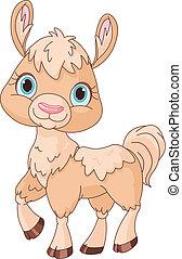 Llama - Illustration of llama on a white background
