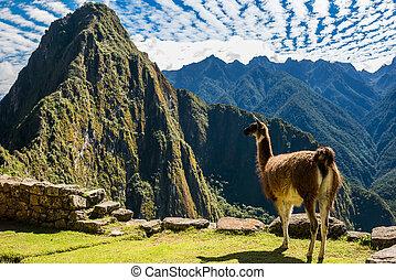 Llama Machu Picchu ruins peruvian Andes Cuzco Peru - Llama...