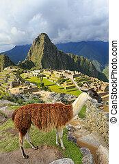 Llama standing at Machu Picchu overlook in Peru. In 2007...