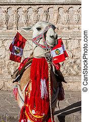 Llama with peruvian flags Arequipa Peru - Llama with...