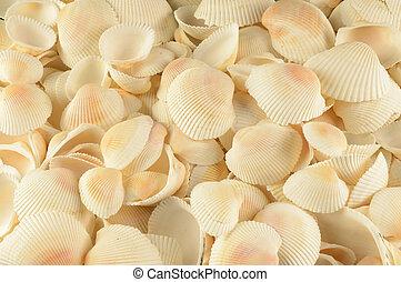 lleno, conchas marinas, marco