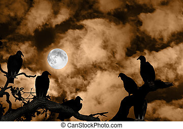 Lleno,  Silhouetted, fantasmal, cielo, contra, luna, naranja, Buitres