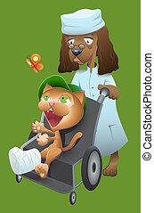 lleva, veterinario, perro, gato