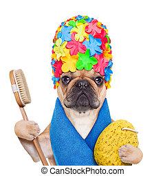 llevando, el bañarse, tener, bulldog, toalla, gorra, aislado, francés, perro, ducha, cepillo, plano de fondo, esponja, listo, blanco, baño, o
