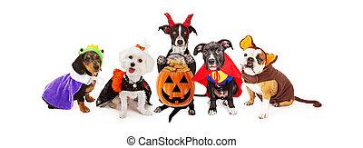 llevando, halloween, trajes, cinco, bandera, perros