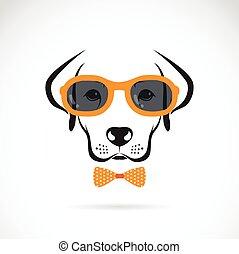llevando, labrador, perro, fondo., vector, imágenes, blanco, anteojos