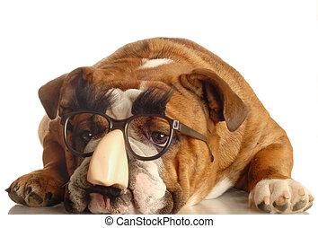 llevando, tonto, perro, anteojos