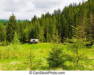 Picturesque spring idyllic scene of the Carpathians.