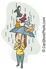 llover, gatos, perros