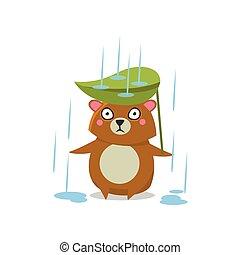 lluvia, oso, marrón, debajo