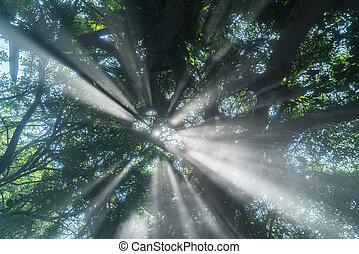 lluvia, piso, subidas, niebla, rayos, arriba, sol de la mañana, bosque