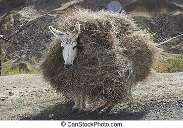 loaded donkey
