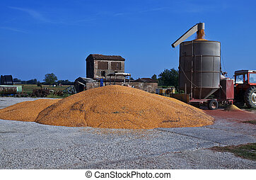 Loading of grain of corn