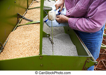 loading seeding machine with wheat seeds and fertilizer