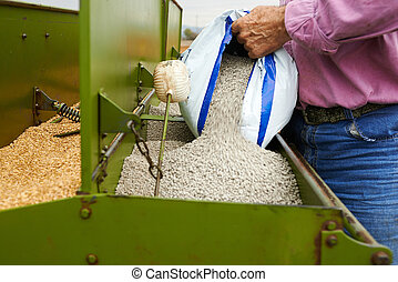 loading seeding machine with wheat seeds and fertilizer to...