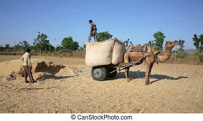 Loading straw onto cart