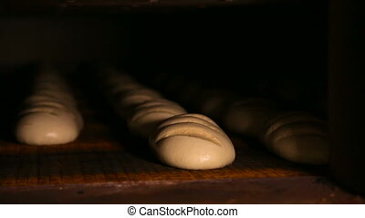 Loaves of raw dough are on the conveyer