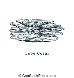 Lobe coral vector illustration.Drawing of sea polyp on white...