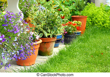 lobelia, flores y plantas, en el jardín