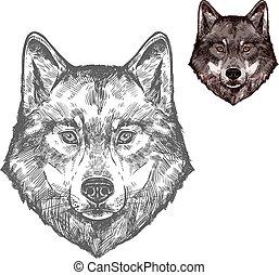 lobo, bozal, vector, aislado, bosquejo, animal