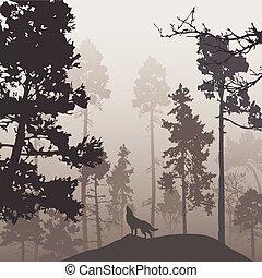 lobo, floresta, pinho