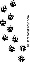 lobo, paw cópias, pista, vetorial, ilustração