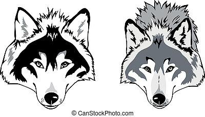 lobo, vector, cabeza