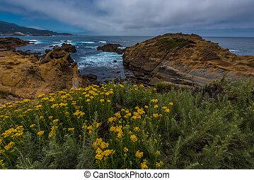 lobos, noordelijk, punt, park, staat, californië, kust, schrob
