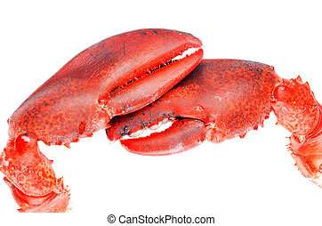Lobster claws isolated on white background close up