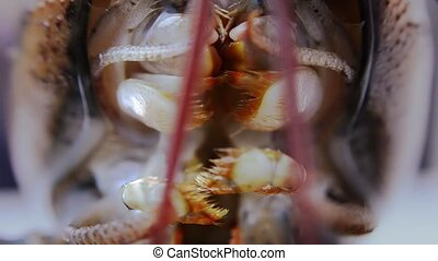 lobster, extreme close up