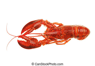 Lobster from above - A lobster viewed from above isolated on...