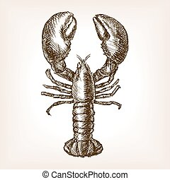 Lobster hand drawn sketch style vector illustration. Old...