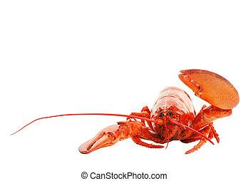 Lobster Hello