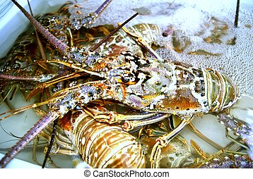 Lobster, in the market to sell.
