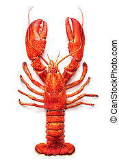 Lobster isolated on a white background