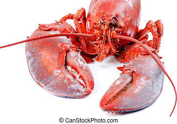 Lobster isolated on white background
