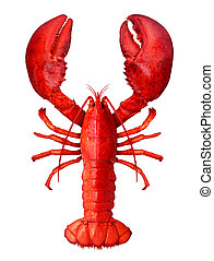 Lobster Isolated - Lobster isolated on a white background as...