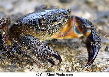Lobster looks on rock.