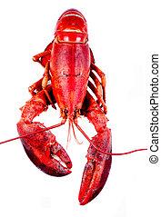 Lobster on white background