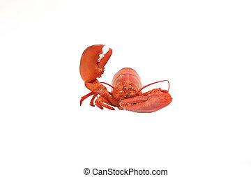 Lobster said Hellow