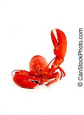 Lobster said Hi