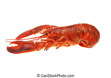 Side view of a whole cooked lobster