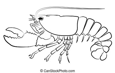 Lobster silhouette isolated on whi