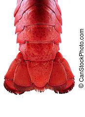 lobster staart, -, backlit