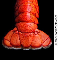 Lobster tail on black background