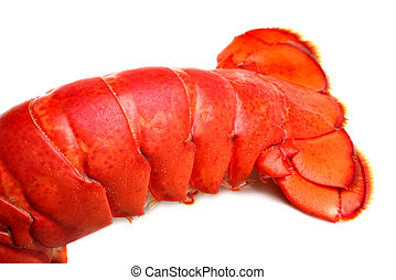 Lobster tail on white background